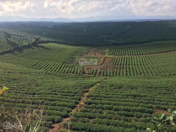 Đất nền nghỉ dưỡng Bảo Lộc Green VaLley ngay trung tâm giá 450tr diện tích 500m2 ảnh 0