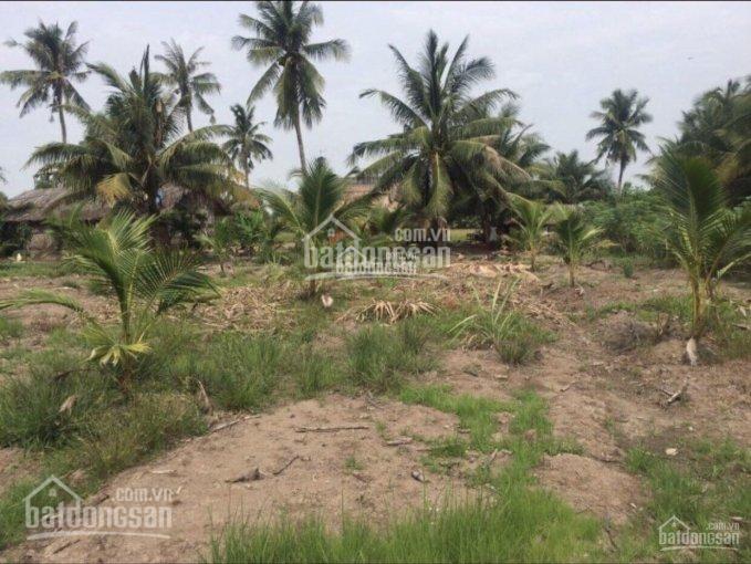 Bán rẻ đất ruộng, vườn cây lâu năm xã Phú Hữu, Nhơn Trạch, Đồng Nai, cách phà 2 - 3km ảnh 0