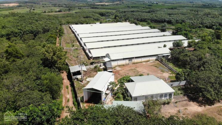 Bán trang trại nuôi heo tại Bà Rịa - Vũng Tàu