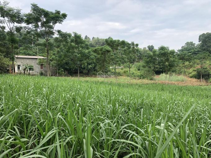 Bán 2100m2 đất trang trại nhà vườn vị trí tuyệt đẹp tại xã Yên Bài, Ba Vì, Hà Nội