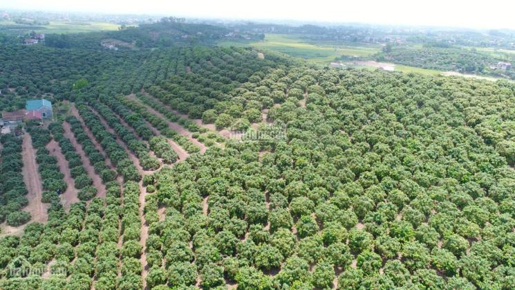 Bán gấp đất trang trại 4 ha trồng Vải Đạo Tú - Tam Dương giá chỉ 1.25 tỷ/ha. Hotline: 0935.628.628