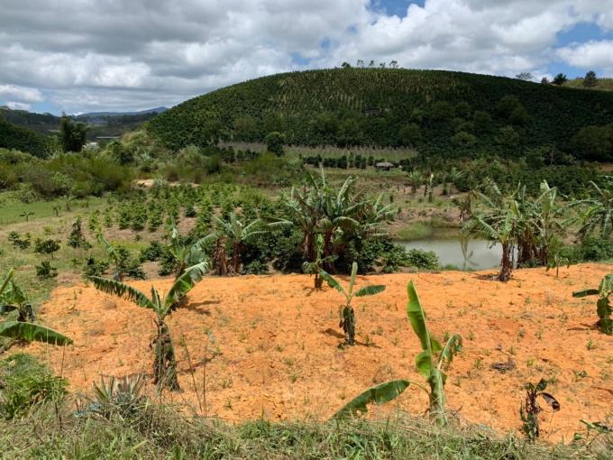 Chính chủ cần bán vườn rẫy cà phê DT 4000m2 Xã Đạ Nhim, huyện Lạc Dương. giá 2 tỷ. LH 0948937060