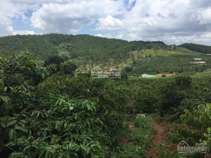 Đất trồng cafe lâu năm cạnh Đà Lạt