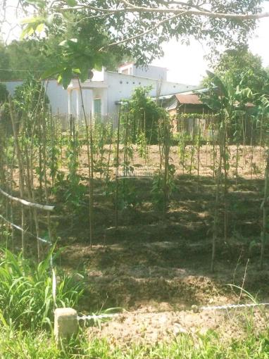 Cần bán gấp lô đất thổ vườn đẹp xã Phú Thạnh, Nhơn Trạch, Đồng Nai, sát đường dự phóng, giá rẻ