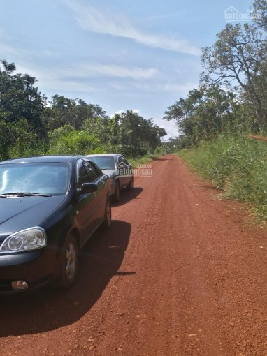 Bán 4,3ha đất đỏ bằng, đẹp đang trồng có điện xe hơi vào tận nơi