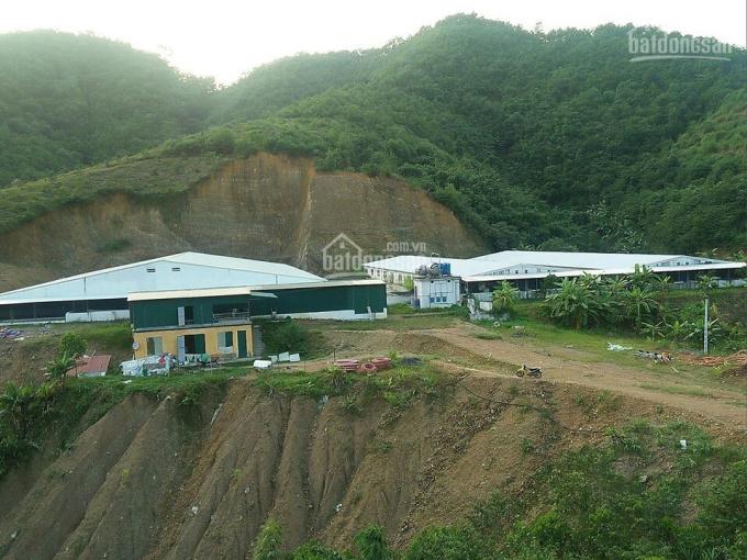 Cần bán trang trại lợn nái và lợn thịt 16ha, tại Lương Sơn, Hòa Bình, Việt Nam.