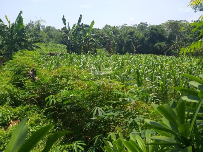 Cần bán đất nền 940m2 đã có tường bao xung quanh, sổ đỏ chính chủ xã Tiến Xuân, Thạch Thất, Hà Nội