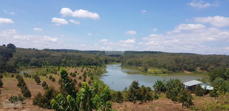 Bán 11 ha trồng cao su sầu riêng và na, điện nước đầy đủ mặt tiền