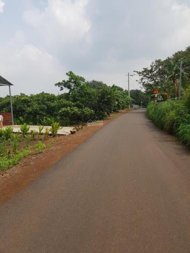 1000m2 đất trồng cây lâu năm đường 5m, Hưng Thịnh, giá 750 nghìn/m2, SHR