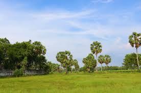 Mình là sale, hiện tại đang có khách cần thuê khoảng 10.000m2 đất làm sân golf. Liên hệ 0329822805