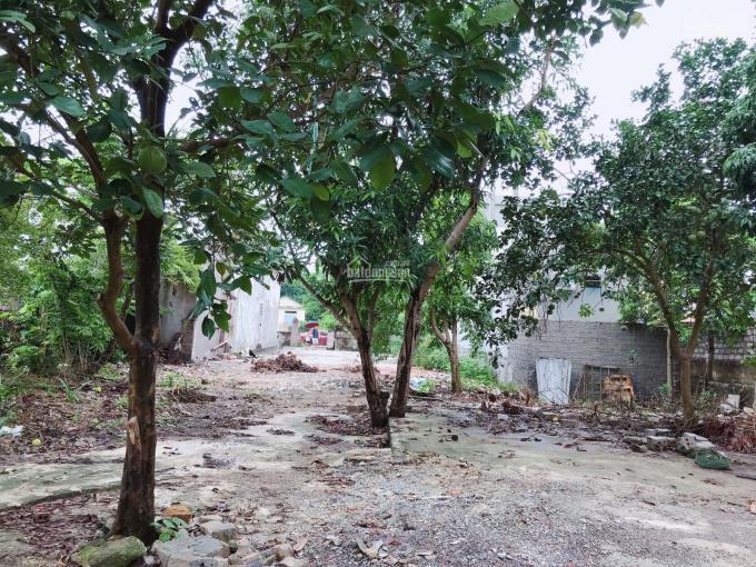 Bán nhà đất bìa đỏ - đất vườn 1500m2 Đông Sơn - Tam Điệp - Ninh Bình ảnh 0