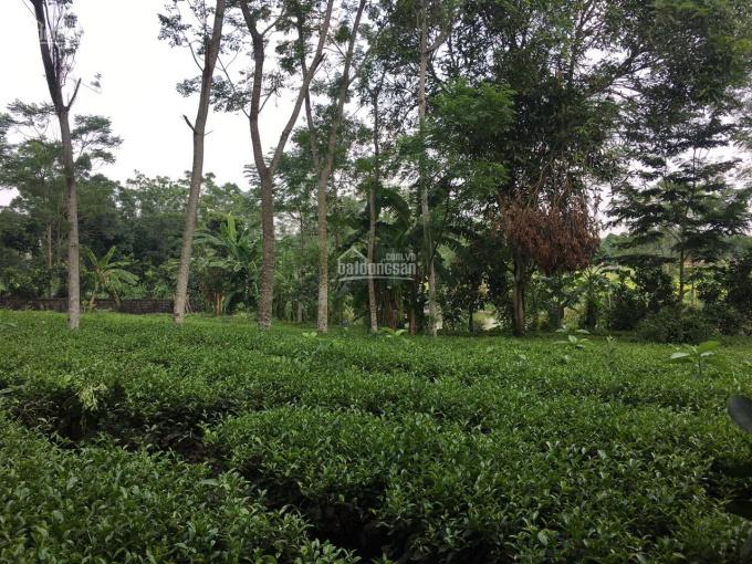 Chuyển nhượng lô đất 1800m2 đất biệt thự nhà vườn khu nghỉ dưỡng cuối tuần tại Yên Bài, Ba Vì, HN