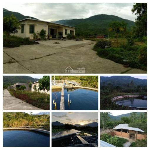 Bán trang trại 5,8 hecta ở Khánh Hòa