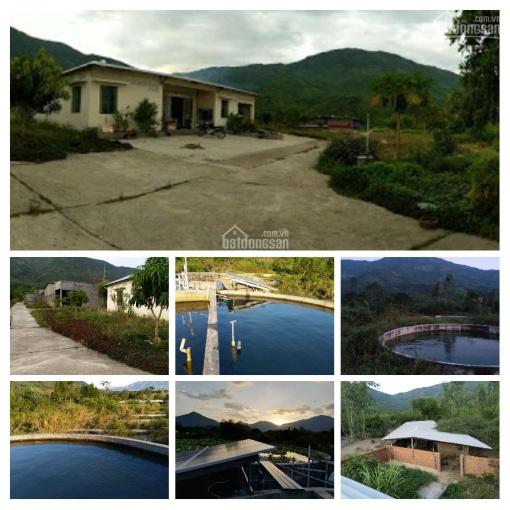 Cần cho thuê trang trại 5,8 hecta ở tỉnh Khánh Hòa