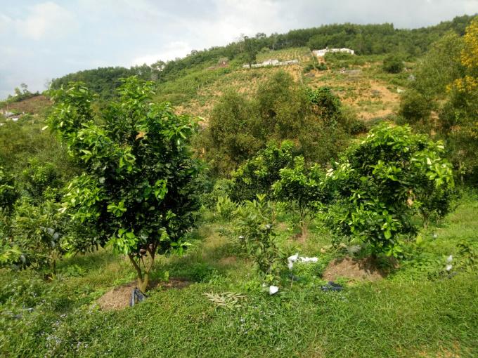 Bán đất xây nghỉ dưỡng, Lĩnh Sơn, Anh Sơn, Nghệ An 0902056788