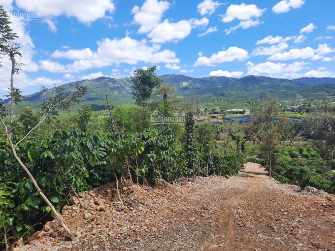 11000m2 view đỉnh đồi nhìn ra TP Bảo Lộc, mặt đường đất 6m