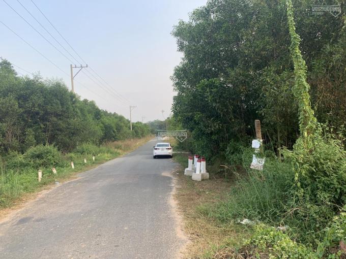 Bán đất làm dự án 140 hecta (đất siêu đẹp) có chủ trương 1/500 phường Tân Định, thị xã Bến Cát, BD ảnh 0