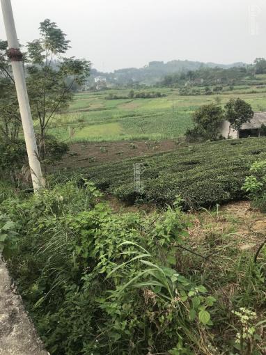 Cần chuyển nhượng đất thích hợp làm biệt thự nhà vườn - nghỉ dưỡng Yên Bài - Ba Vì