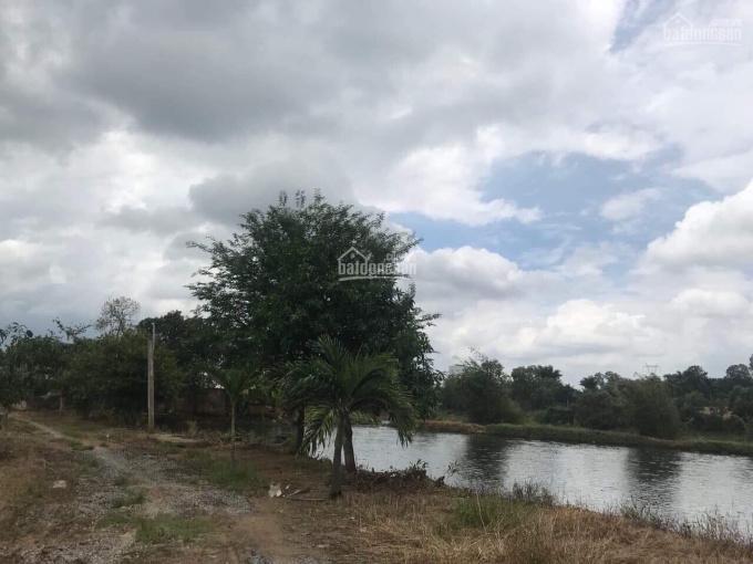 Có lô đất vườn mua về là thu hoạch ngay tại xã La Ngà, huyện Định Quán, tỉnh Đồng Nai