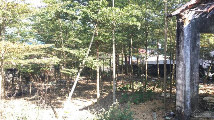 Chính chủ cần bán lô đất 960m2 giá rẻ thôn Quýt - Yên Bài - Ba Vì LH 0906262625