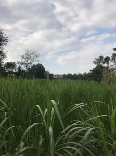 Cần bán đất 2 mặt tiền đường Bến Súc, xã An Phú, Củ Chi
