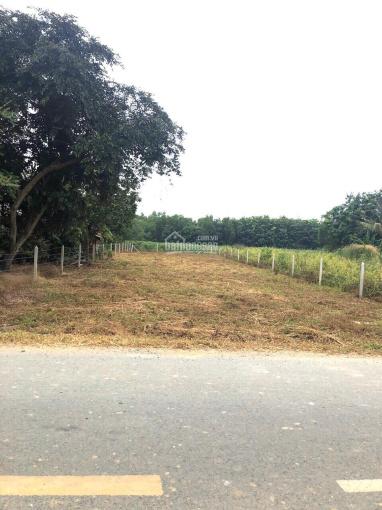 Chính chủ bán đất mặt tiền đường Bùi Thị Điệt: 12,5m x 56m = 700m2