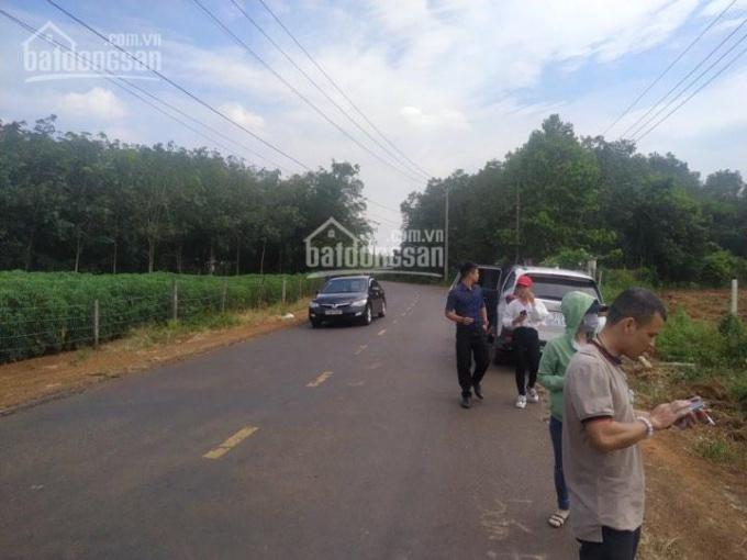 3000m2 (67x44m) đường Huỳnh Minh Thạnh Xuyên Mộc Bà Rịa Vũng Tàu hướng về Hồ Tràm 3 tỷ thương lượng