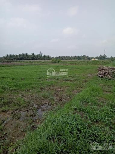 Bán đất trồng cây, làm vườn, Châu Thành, Tiền Giang, DT: 2500 m2. LH: Trang 0939.286.575