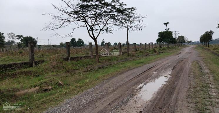 Chính chủ bán đất sinh thái Cẩm Đình lô G1X, G16X, H14 view hồ, view sông LH 098.117.3786