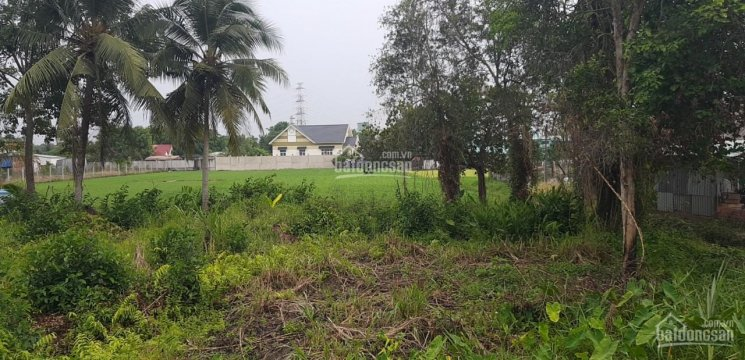Bán 2470m2 đất trồng cây có 300m2 thổ cư Bình Mỹ giá chỉ 4,2 triệu/m2 LH 0915.570.579 Quang Thành