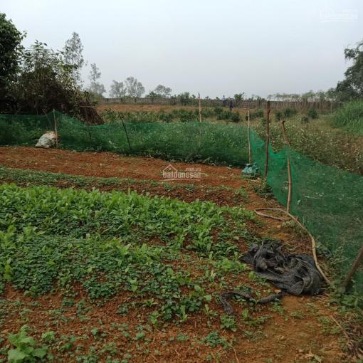 Gia đình thuần nông cần bán 3600m2 đất thổ cư, đất ở view cánh đồng