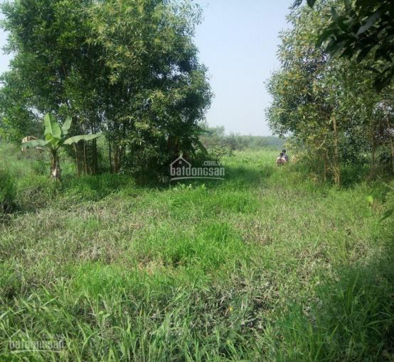 Bán đất sông Buông, 3 mặt tiền đường ĐT 771, nối kết Long Thành, Nhơn Trạch và Biên Hòa, 0946374881 ảnh 0