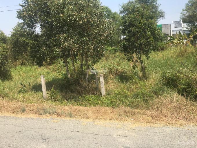 Bán đất xã Tân Lân, huyện Cần Đước, tỉnh Long An