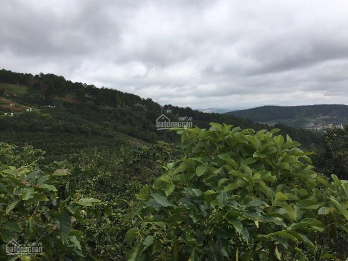 Bán đất Đà Lạt 1140m2, gần đồi chè Cầu Đất Farm (sổ đỏ)