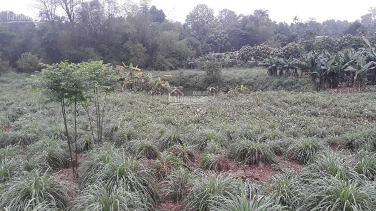 Bán gấp 3992m2 thổ cư thoáng đẹp Hòa Sơn, Lương Sơn, Hòa Bình