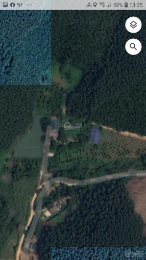 Gia đình cần cho thuê trang trại tổng hợp tại Tuyên Quang