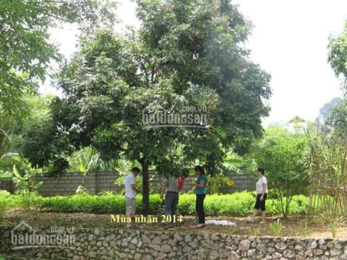 Cực hiếm khuôn viên resort 6800m đang kinh doanh ở Lương Sơn giá chỉ 3.x tỷ. 0948.035.862