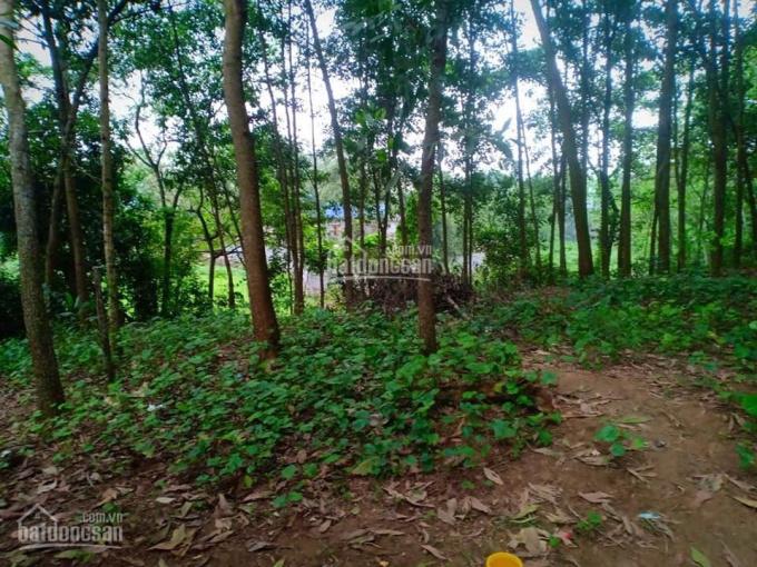 Chủ gửi bán 42ha đất rừng có suối giá chỉ 100tr/ha ở Lương Sơn, Hòa Bình. 0948.035.862
