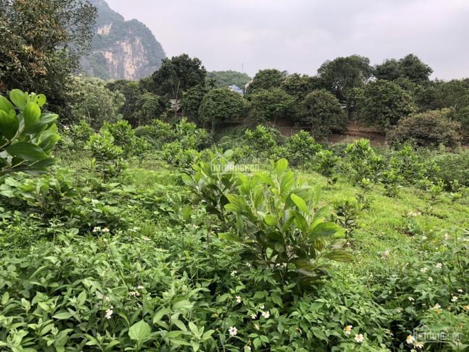 Bán gấp 836m2 đất nghỉ dưỡng bám suối chảy quanh năm, tại Lâm Sơn, Lương Sơn, Hòa Bình