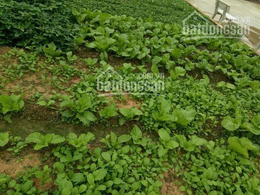 Bán đất vườn Bùi Công Trừng, xã Nhị Bình, Hóc Môn, 5000m2, giá 3 triệu/m2 ảnh 0