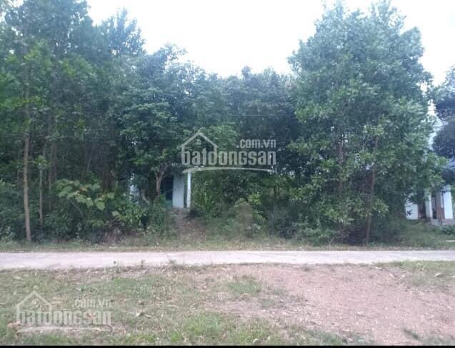 Bán 1247m2 đất vườn Hòa Phú, Hòa Vang, Đà Nẵng có 300m2 đất ở sát quốc lộ 14G đẹp: 0973343779