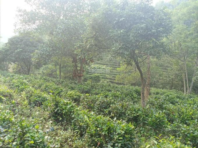 Bán gấp đất rừng sản xuất giá rẻ tại, Lương Sơn, Hòa Bình, diện tích 4.7ha