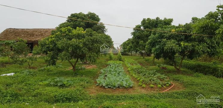 Chuyển nhượng trang trại phù hợp làm khu nghỉ dưỡng, viện dưỡng lão hoặc chăn nuôi quy lớn mô lớn