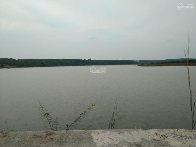 Cho thuê 4 ha bưởi da xanh 6 tuổi cạnh hồ nước