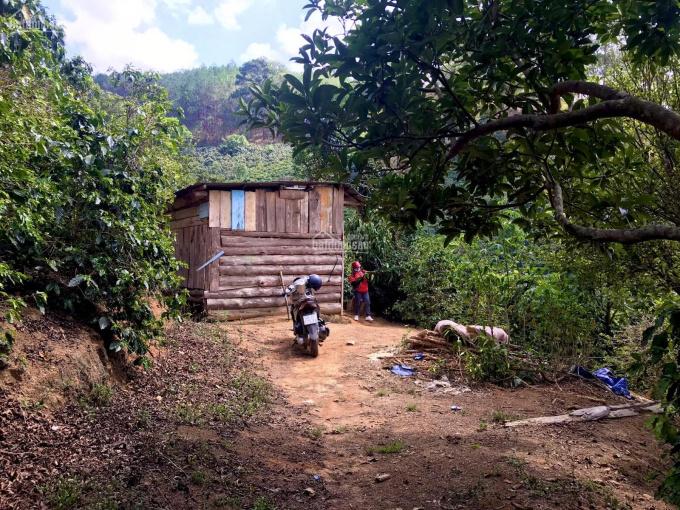 Bán giùm anh chị cạnh nhà, lô đất 6.000m2 thuộc ngoại ô Đà Lạt 850 tr vườn cafe, hồng, bơ và nhà gỗ