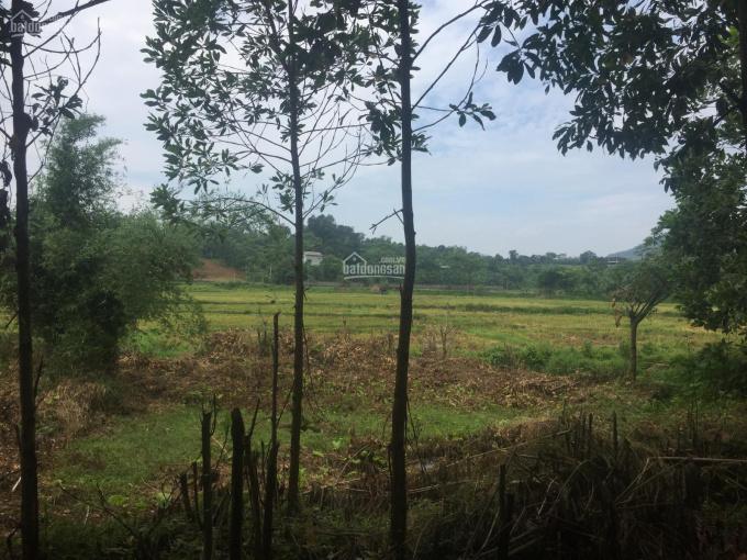 Đất làm nhà vườn nghỉ dưỡng giá đầu tư có tổng diện tích 3100m2 tại Hòa Sơn, Lương Sơn, Hòa Bình
