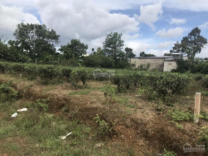 Cần bán lô đất rộng tại phường Lộc Tiến, TP Bảo Lộc, Lâm Đồng. Diện tích: 567m2, có ngang 18,8m