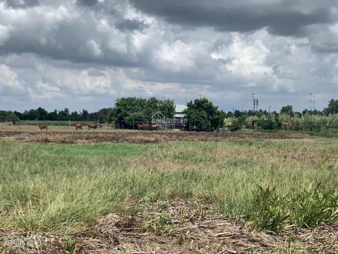 Tôi chính chủ cần bán 4 lô đất Phước Khánh Nhơn Trạch đang cắt thửa bán giá gốc, 880tr/1000m2 SHR ảnh 0