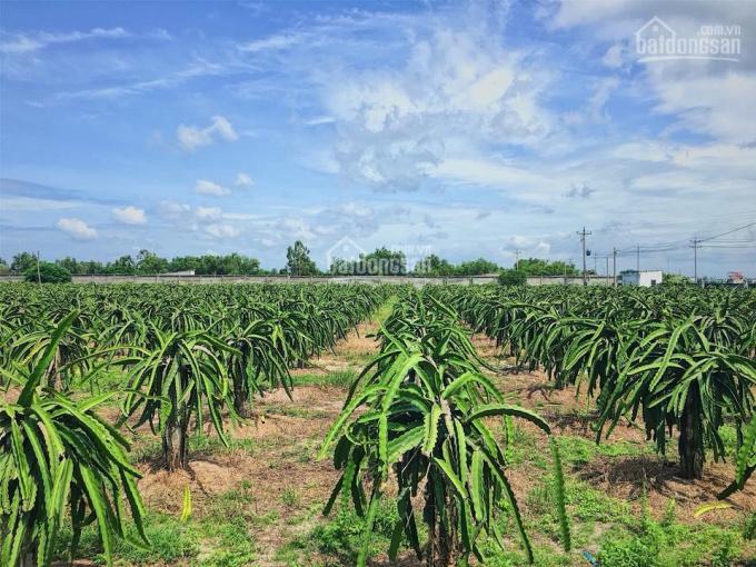 Để lại miếng đất cho ai muốn làm nông nghiệp, giá chỉ 50.000đ/m2, liên hệ chính chủ 0901411040, SĐR ảnh 0