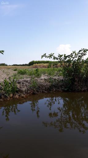 Tôi cần bán vài lô đất vườn MT sông lớn xã Phú Đông ảnh 0